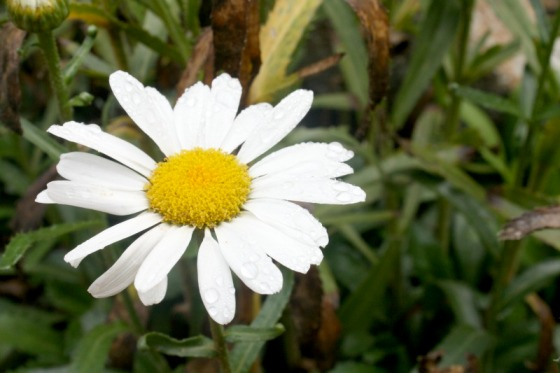 flowers, garden, landscapes, health retreat, health spa, destination spa